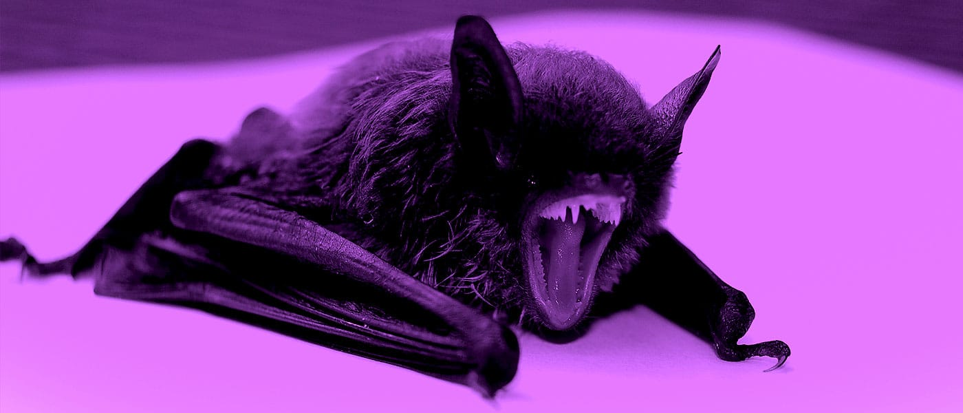 Ethics Explainer: What is it like to be a bat?